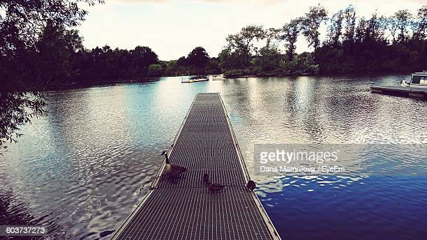 High Angle View Of Canada Goose And Ducks On Pier At Lake