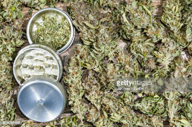 High Angle View Of Cannabis Plants By Grinder