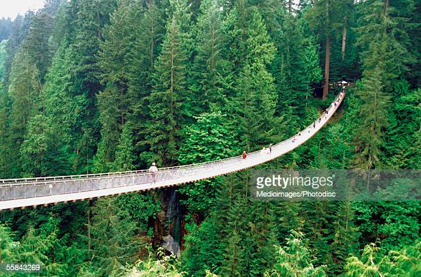 high angle view of capilano suspension bridge and trees, vancouver, british columbia, canada - suspension bridge stock photos and pictures