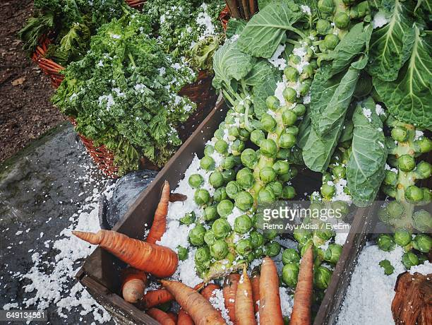 High Angle View Of Carrots And Brussels Sprouts In Container During Winter