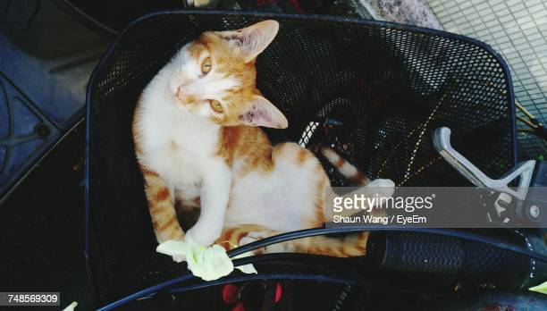 High Angle View Of Cat In Bicycle Basket
