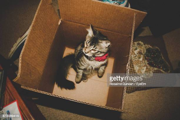 High Angle View Of Cat In Cardboard Box At Home