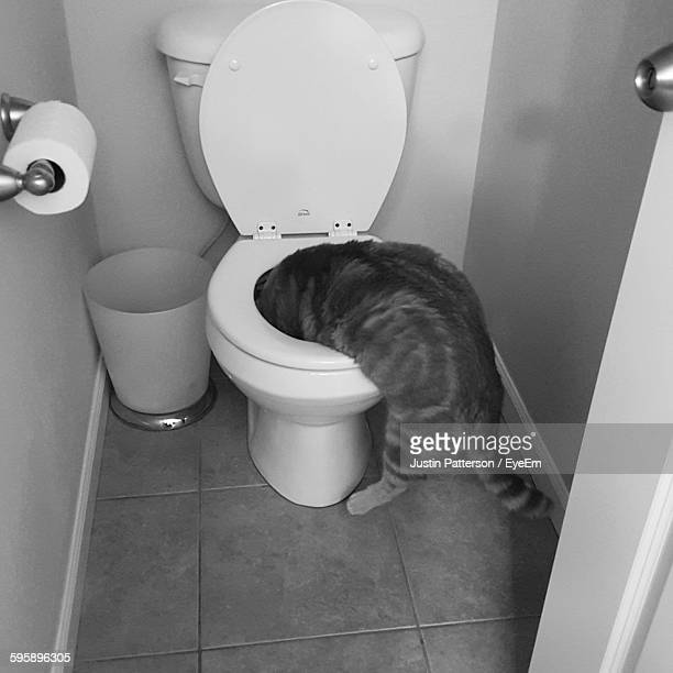 high angle view of cat in toilet bowl - kitty patterson stock pictures, royalty-free photos & images