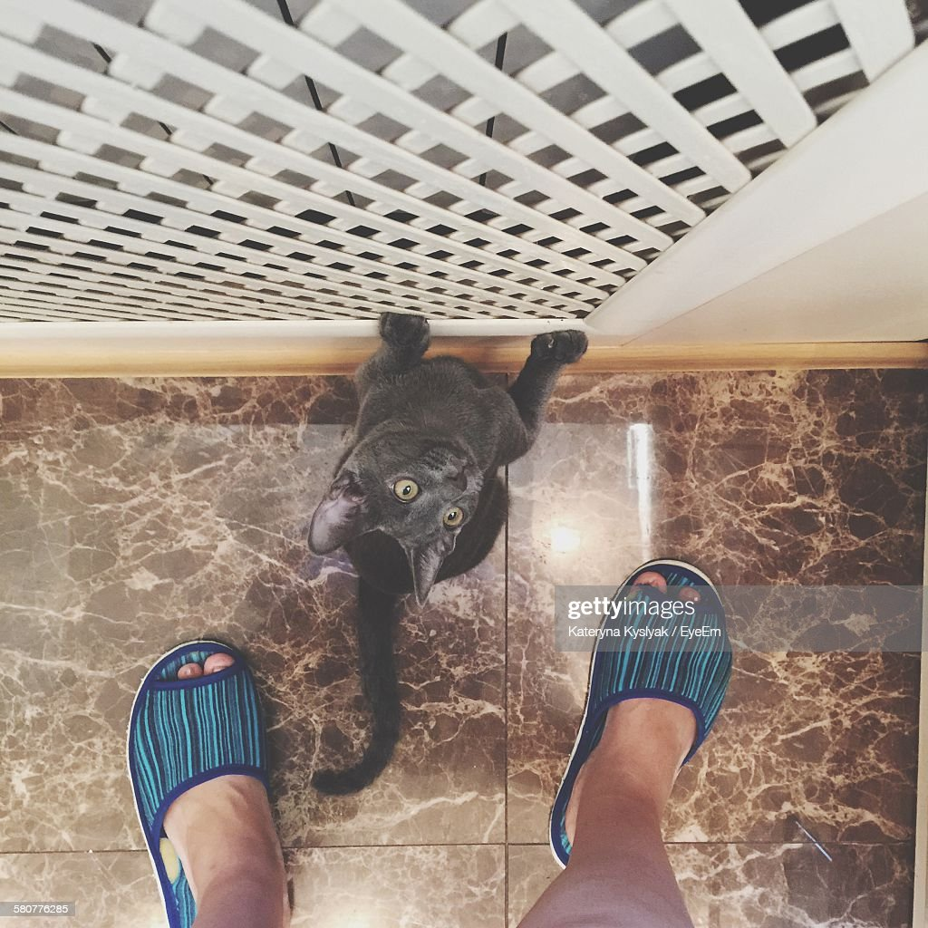 High Angle View Of Cat Looking At Owner In Kitchen