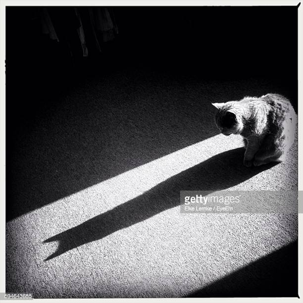 High Angle View Of Cat Looking At Shadow