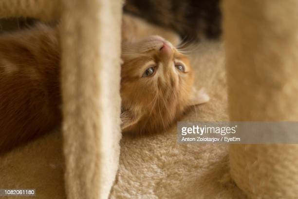 High Angle View Of Cat Looking Away While Lying On Bed At Home