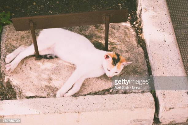 High Angle View Of Cat Lying Outdoors
