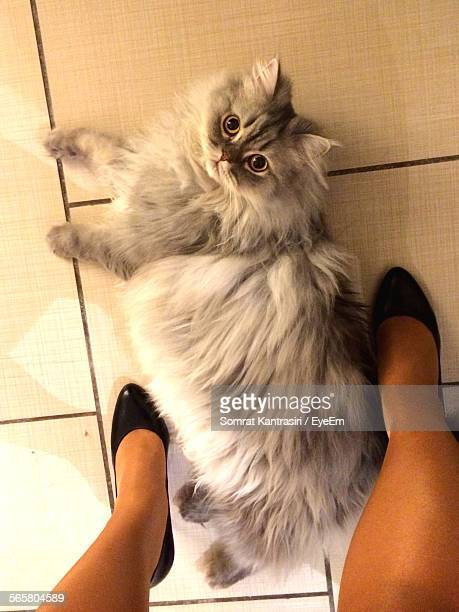 High Angle View Of Cat On Floor