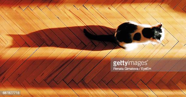 High Angle View Of Cat On Hardwood Floor