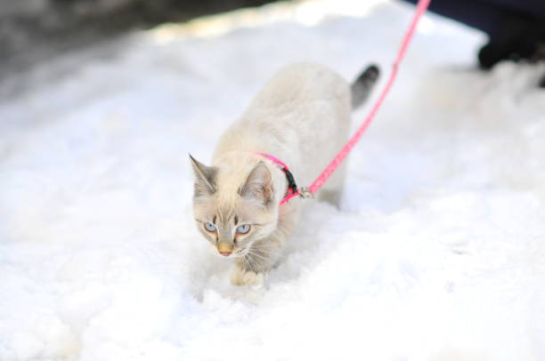 High angle view of cat on snow
