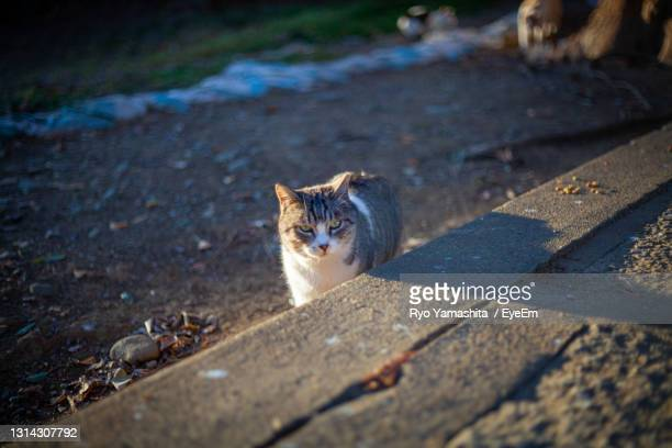high angle view of cat on street - kawagoe stock pictures, royalty-free photos & images