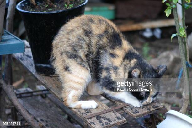High Angle View Of Cat On Wooden Table