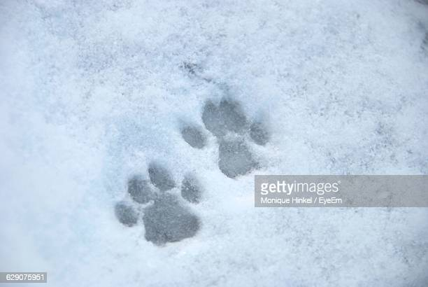 High Angle View Of Cat Paw On Snowy Field