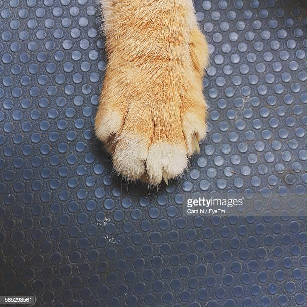 high angle view of cat paw - paw stock pictures, royalty-free photos & images