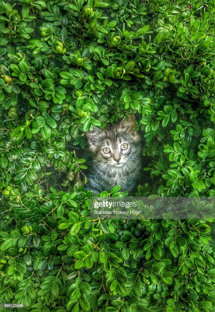 High angle view of cat : Stock Photo