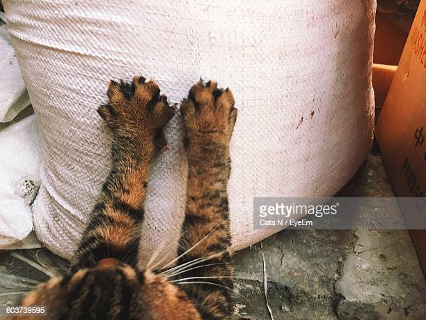 High Angle View Of Cat Reaching Sack