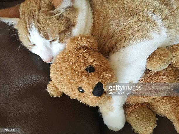 High Angle View Of Cat Relaxing With Teddy Bear On Sofa At Home