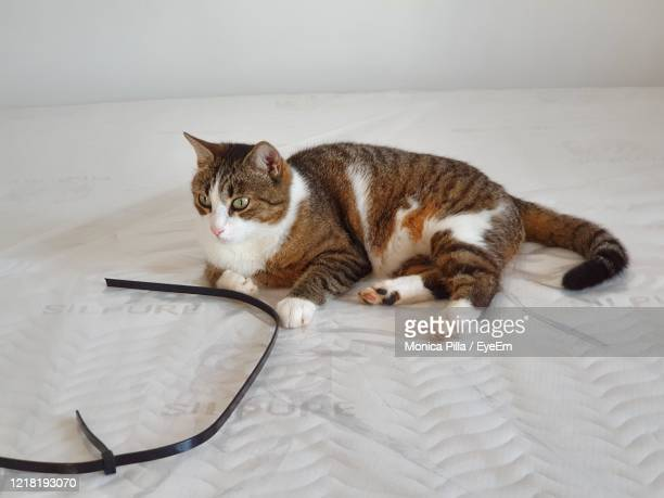high angle view of cat resting on bed - treviso italy stock pictures, royalty-free photos & images