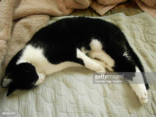 High Angle View Of Cat Resting On Bed
