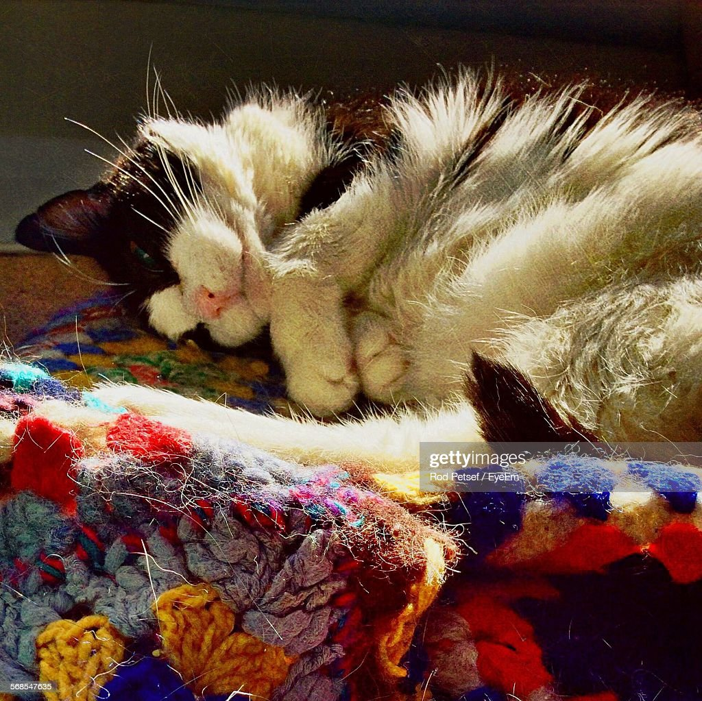 High Angle View Of Cat Resting On Sofa : Stock Photo