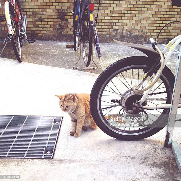 high angle view of cat sitting on street - rachel wolfe stock pictures, royalty-free photos & images