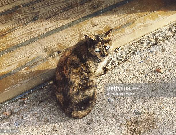 High Angle View Of Cat Sitting On Street