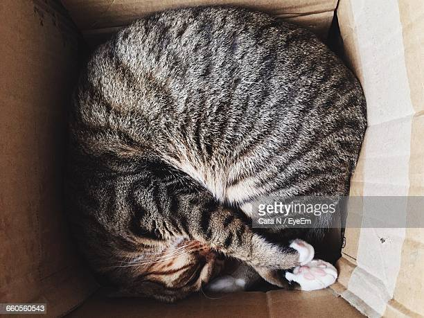 High Angle View Of Cat Sleeping In Box