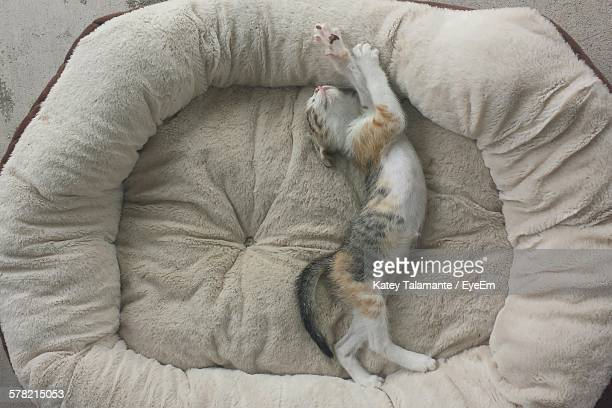 high angle view of cat sleeping in pet bed - pet bed stock pictures, royalty-free photos & images