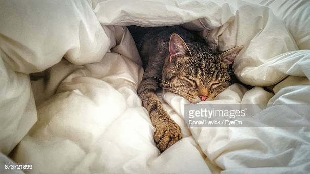 high angle view of cat sleeping on bed at home - cushion stock pictures, royalty-free photos & images