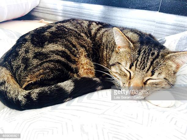 high angle view of cat sleeping on bed - lola reve photos et images de collection