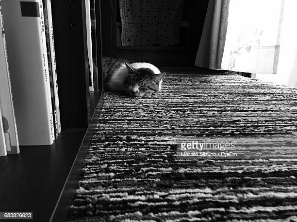 High Angle View Of Cat Sleeping On Rug By Bookshelf At Home