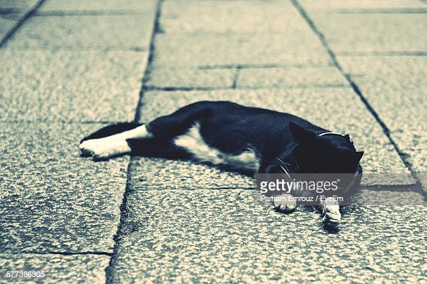 high angle view of cat sleeping on sidewalk - parham emrouz stock pictures, royalty-free photos & images