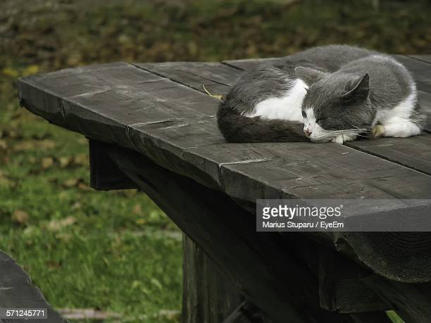 High Angle View Of Cat Sleeping On Wooden Table