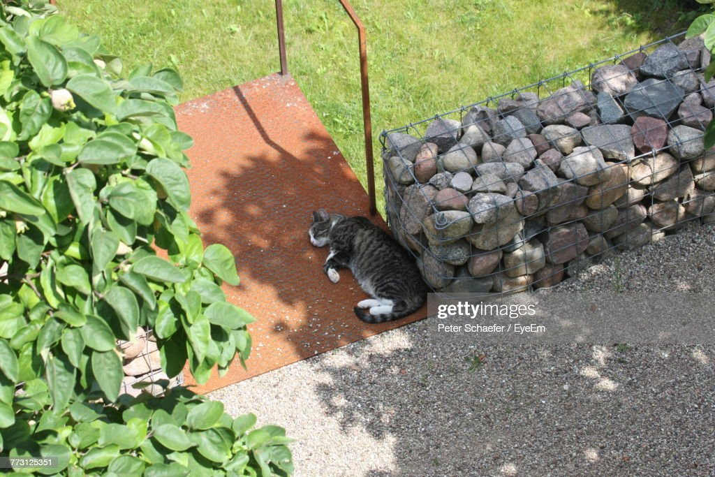 High Angle View Of Cat Sleeping Outdoors : Photo