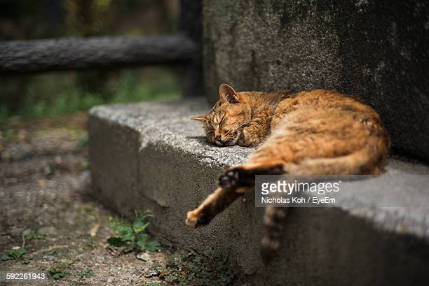 High Angle View Of Cat Sleeping