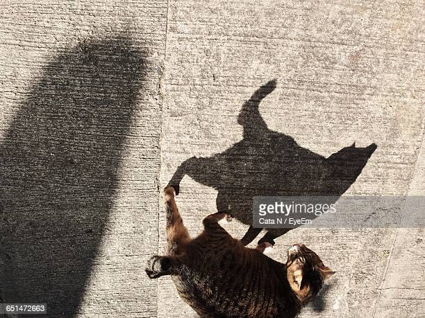 High Angle View Of Cat Standing On Footpath With Shadow