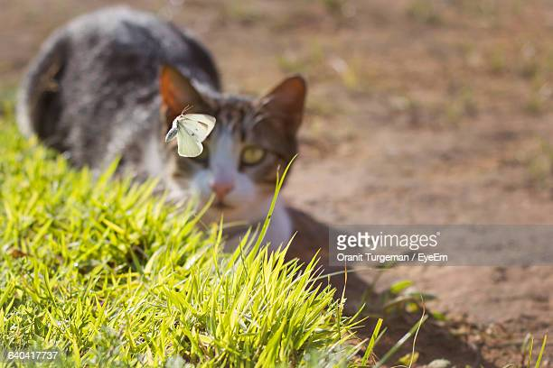 High Angle View Of Cat Staring At Butterfly Flying On Field