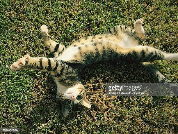 High Angle View Of Cat Stretching On Grassy Field