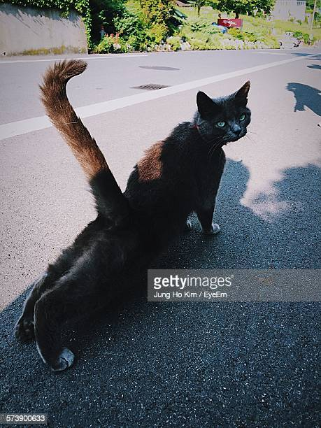 high angle view of cat stretching on road - kim jung un foto e immagini stock