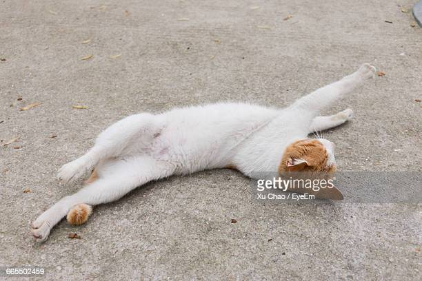 High Angle View Of Cat Stretching On Street