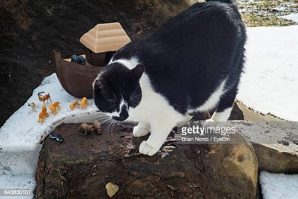 High Angle View Of Cat With Toys On Rock At Snow Covered Field