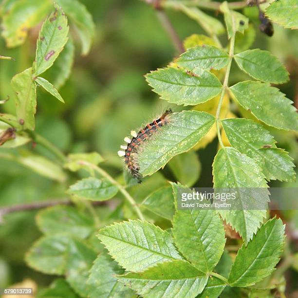 High Angle View Of Caterpillar On Plant