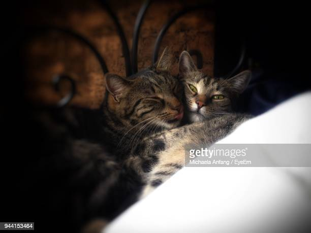 high angle view of cats at home - anfang stock pictures, royalty-free photos & images