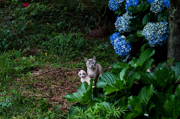 High Angle View Of Cats By Plants On Field