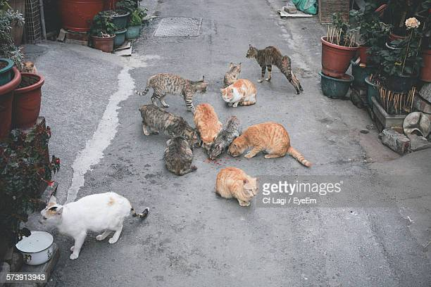 High Angle View Of Cats Eating Food On Street