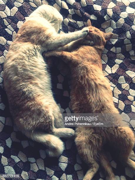 High Angle View Of Cats Fighting On Bed At Home
