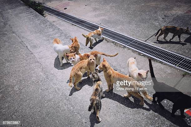 High Angle View Of Cats On Street