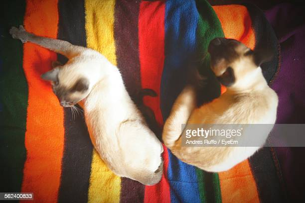 high angle view of cats - andres ruffo stock pictures, royalty-free photos & images