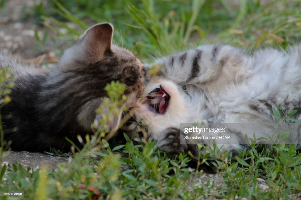 High angle view of cats : Stock Photo