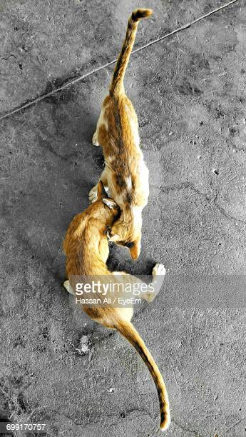 High Angle View Of Cats
